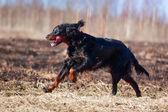 Doğa üzerinde köpek — Stok fotoğraf
