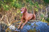 自然に犬 — ストック写真