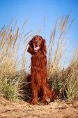 Dog on nature — Stok fotoğraf
