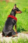 Dierlijke hond — Stockfoto
