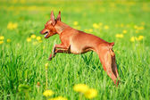 Animal dog — Stock Photo