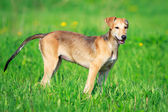 Animal dog — Stockfoto