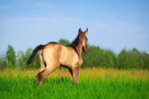 Horse in summer field — 图库照片