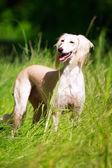 Animal dog — 图库照片