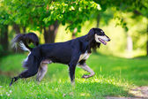 Cane animale — Foto Stock