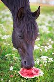 Cavalo preto — Foto Stock