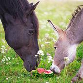 Horse and donkey — Foto Stock