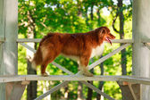 Animaux chien — Photo