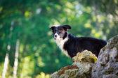 Animal cachorro — Foto Stock