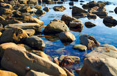 Seashore Barnacles — Stock Photo