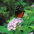 Butterfly feeding on a flower — Stock Photo