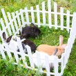 Rabbits in the fence — Stock Photo