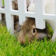 Stock Photo: Closeup of rabbit in cage