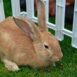 Stock Photo: Rabbit in cage