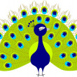 Peacock cartoon — Stock Vector