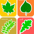 Cut-out leaf stickers for toddler book — Stock Vector