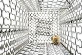 Krysy v kleci — Stock fotografie