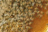 Closeup swarm of honeycomb on tree. — Stock Photo