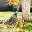 A rake and autumn leaves — Stock fotografie