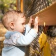 Baby boy standing near metal fence in autumn yard — Stock Photo