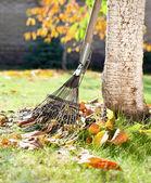 A rake and autumn leaves — Stock Photo