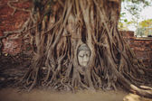 Buddha head in the branches of a tree — Stock Photo
