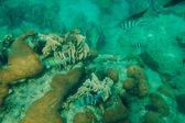 热带海洋鱼 — Stockfoto