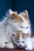 Cat and kitten hug isolated on black background — Stock Photo