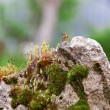 Moss on stone wall in spring — Stock Photo