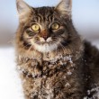 Cat in snow — Stock Photo #21289861