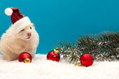 New year's eve hamster with red balloons and the Christmas tree — Stock Photo