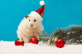 New year's eve hamster met rode ballonnen en de kerstboom — Stockfoto