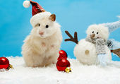 Dwarf hamster with christmas red hat — Stock Photo