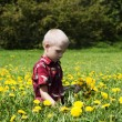 Little boy in flowers field — Stock Photo #21290655