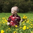 Little boy in flowers field — Stock Photo #21290727