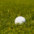 Stock Photo: Golf ball on green grass of golf course