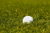 Golf ball on the green grass of the golf course — Stock Photo