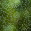 Spider web with water drops  — Stock Photo #14449883
