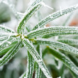 Frozen plant — Stock Photo