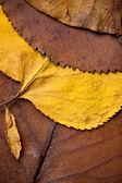 Closeup of beautiful fall foliage — Stock Photo