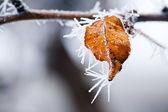 冷冻的叶 — 图库照片