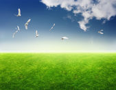 Field of grass, birds in blue sky and sun — Stock Photo