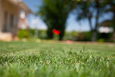 Green grass close up in the backyard — Stock Photo