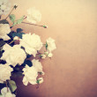 Stock Photo: White roses, retro tinted photo