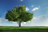 Green field and tree, cloudy sky on background — Stock Photo
