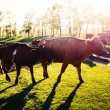 Cows on a summer pasture — Stock Photo #34089559
