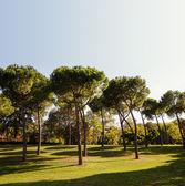 Summer park, trees. Rome, Italy — Stock fotografie