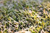 Frozen green grass. Winter time. — Stock Photo