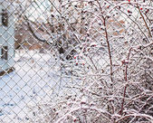 Frost on a fence — Stock Photo