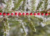 Christmas decorations on the frozen branches of a coniferous tre — Stock Photo